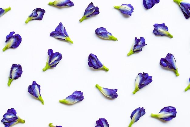 Flor de ervilha borboleta em branco
