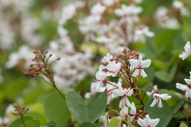 Flor de flor branca