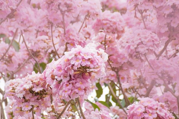 Flor de flor-de-rosa no jardim