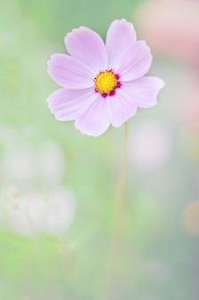 Flor de foco suave no fundo da natureza