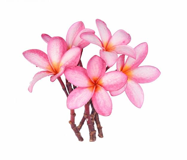 Flor de frangipani com gotas de água isolado no fundo branco