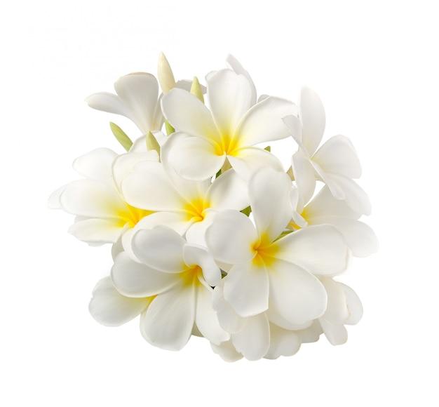 Flor de frangipani isolada no branco no espaço em branco