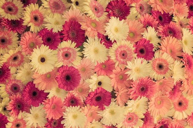 Flor de gerbera.