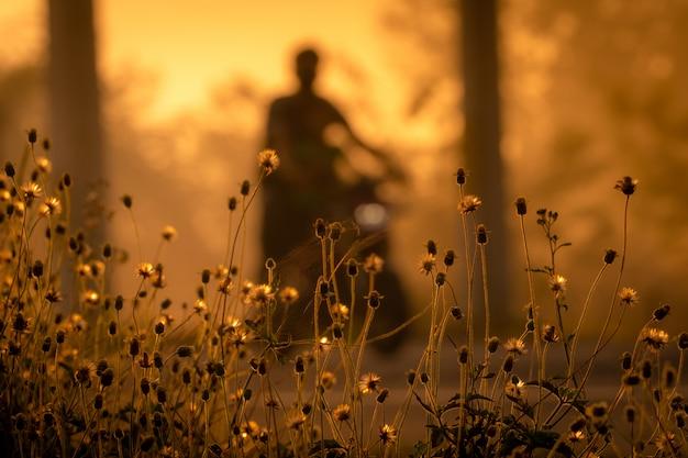 Flor de grama ao lado da estrada no fundo desfocado das pessoas andam de moto pela manhã com a luz solar.