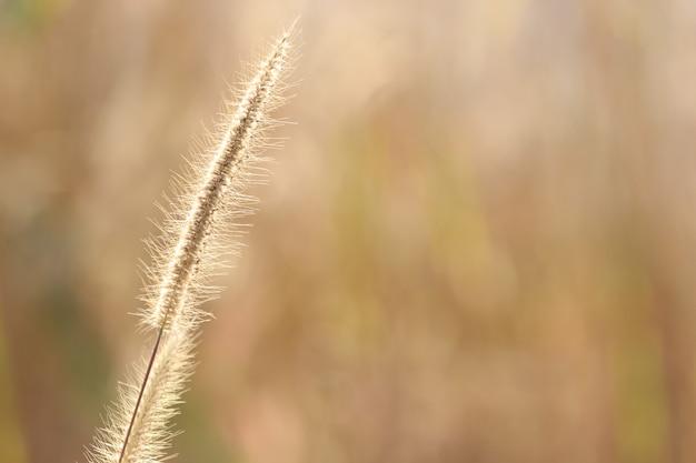 Flor de grama bonita na montanha