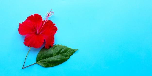 Flor de hibisco com folha sobre fundo azul.