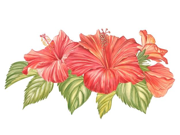 Flor de hibisco vermelho isolada. hibisco colorido realista de aquarela flor tropical com folhas. composição havaiana florida. floral tropical exótico