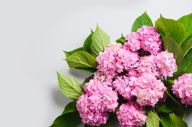 Flor de hortênsia rosa fresca. composição floral.