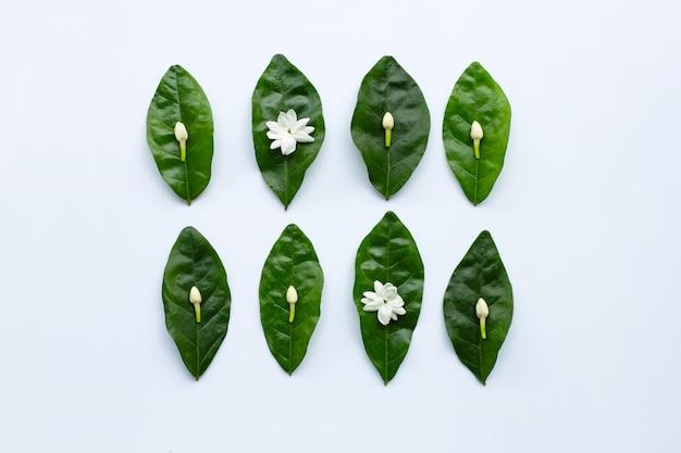 Flor de jasmim com folhas no fundo branco.