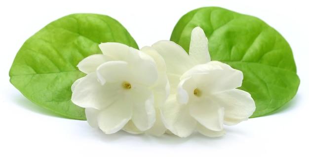 Flor de jasmim com folhas sobre fundo branco