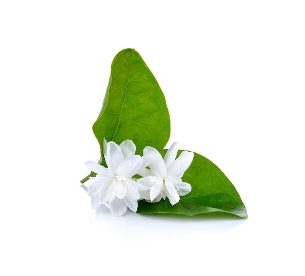 Flor de jasmim em branco