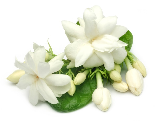 Flor de jasmim sobre fundo branco com foco seletivo