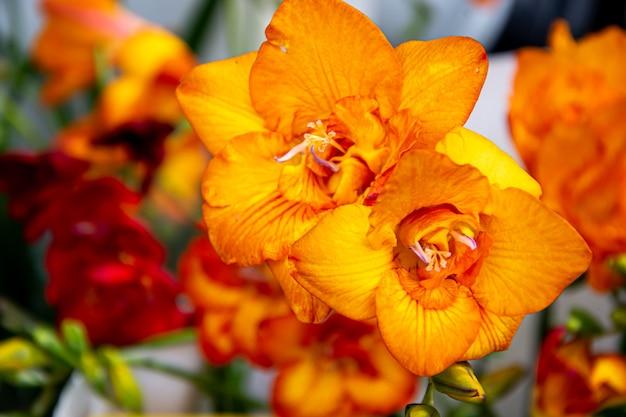 Flor de laranjeira com fundo verde