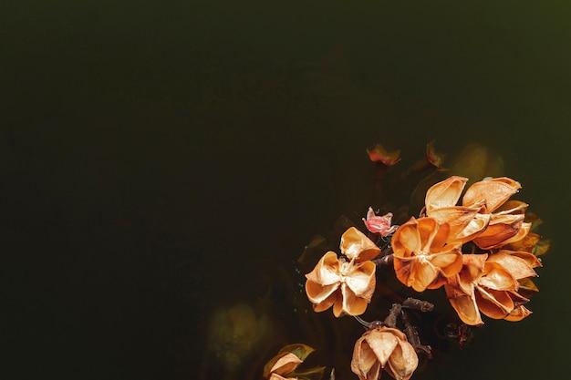 Flor de laranjeira na água preta com espaço de cópia