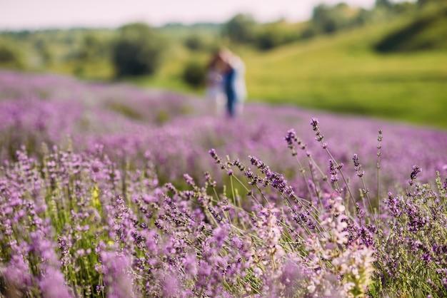 Flor de lavanda closeup em um campo ao lado de colinas verdes.
