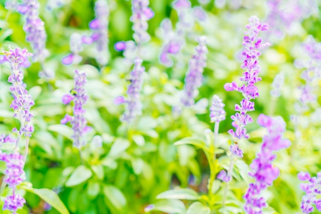 Flor de lavanda