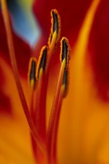 Flor de lírio brilhante fotografada de perto