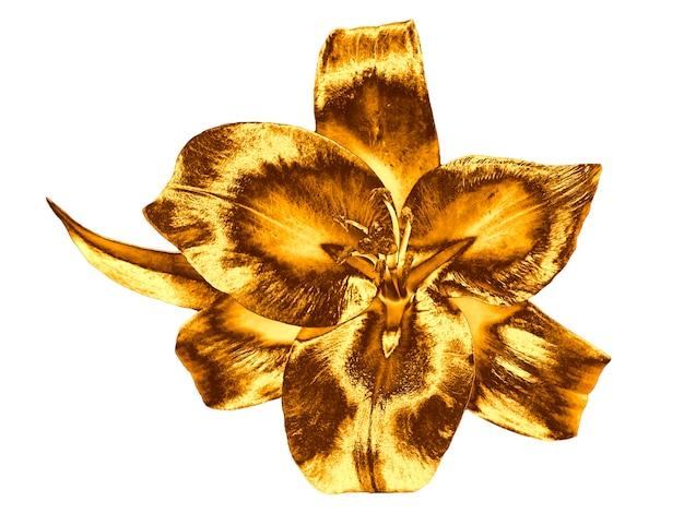 Flor de lírio de ouro isolada no fundo branco.