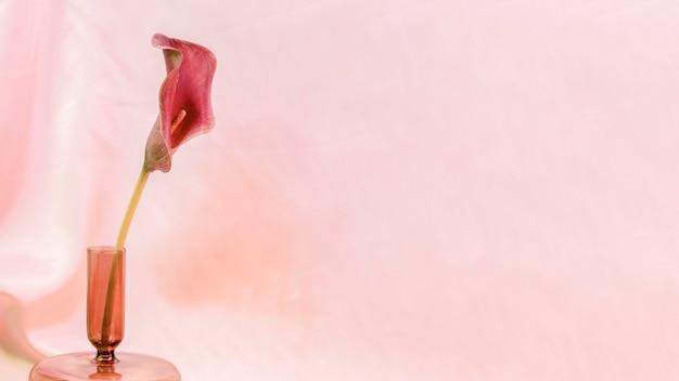 Flor de lírio rosa em um vaso em fundo rosa