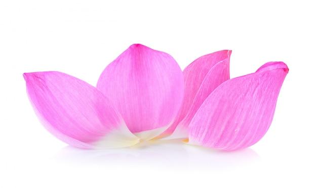 Flor de lótus pétala em fundo branco