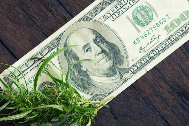 Flor de maconha na nota de cem dólares