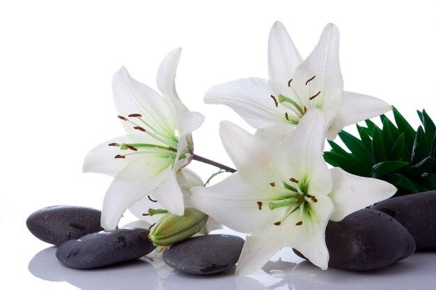 Flor de madonna lírio com pedras em branco