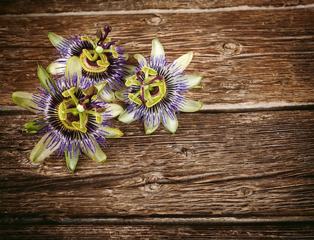 Flor de maracujá