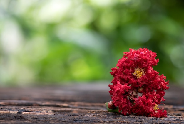Flor de murta ou lagerstroemia indica na superfície da natureza.