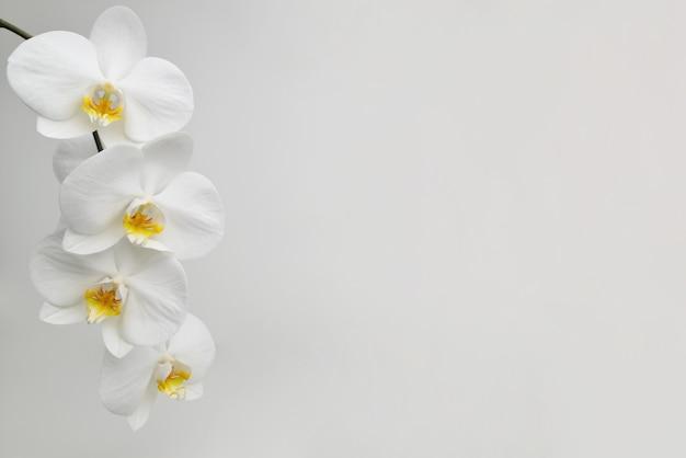 Flor de orquídea branca em um espaço de superfície texturizada branca para um texto