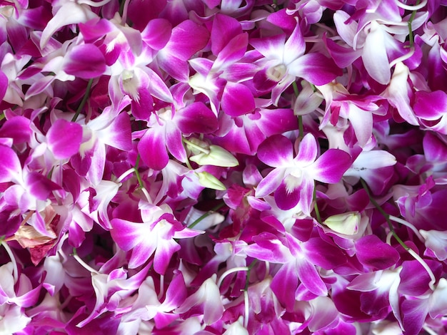 Flor de orquídea closeup em fundo de jardim de inverno