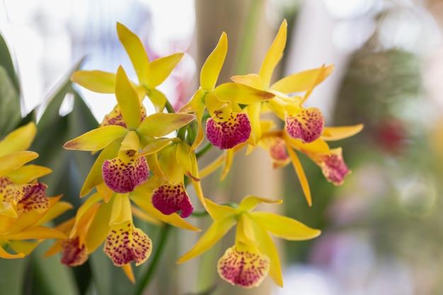 Flor de orquídea dendrobium no jardim