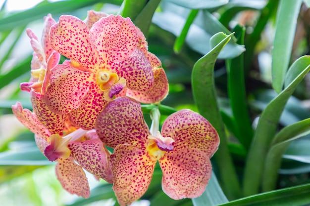 Flor de orquídea no jardim de orquídeas no inverno ou dia de primavera