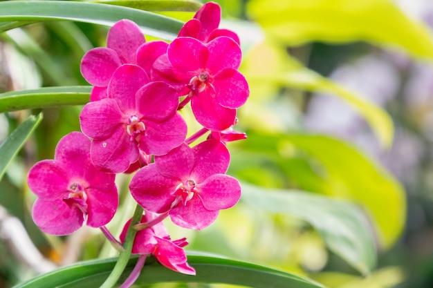 Flor de orquídea no jardim de orquídeas no inverno