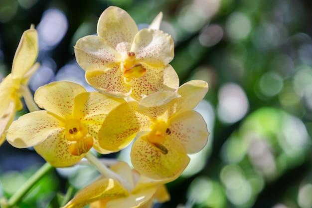 Flor de orquídea no jardim de orquídeas