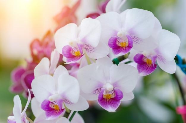 Flor de orquídea no jardim no inverno ou dia de primavera