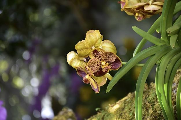 Flor de orquídea no jardim no inverno