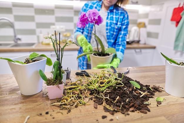 Flor de orquídea phalaenopsis em vaso, mulher cuidando do transplante de planta, fundo de cozinha