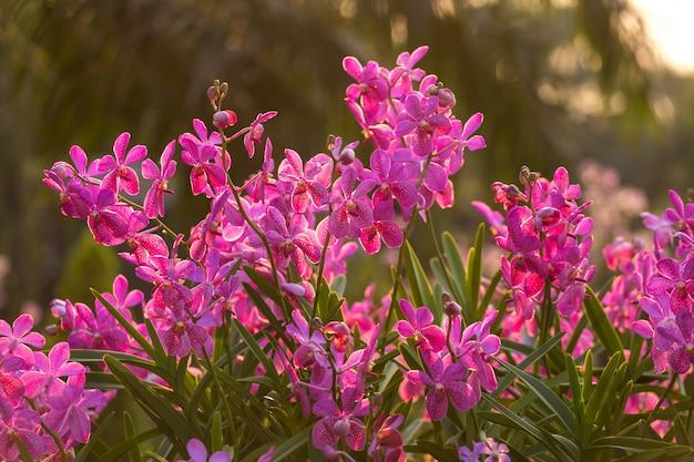 Flor de orquídea rosa no jardim