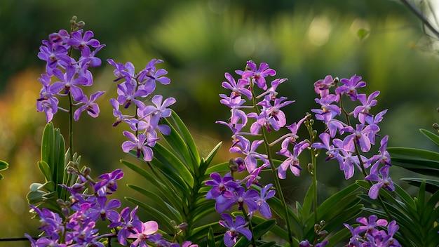 Flor de orquídea roxa no jardim