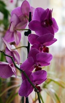 Flor de orquídea roxa