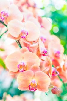 Flor de orquídea