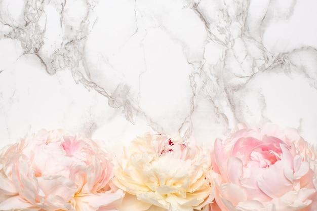Flor de peônia branca e rosa linda na superfície de mármore com espaço de cópia