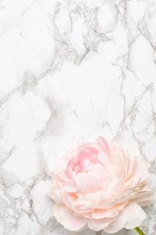 Flor de peônia branca linda na superfície de mármore com espaço de cópia