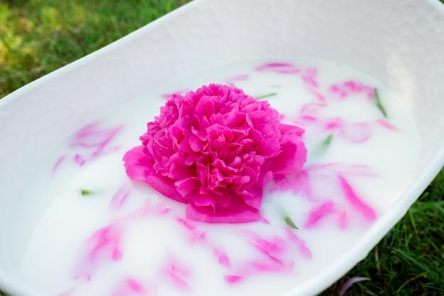 Flor de peônia com pétalas em um banho de leite.