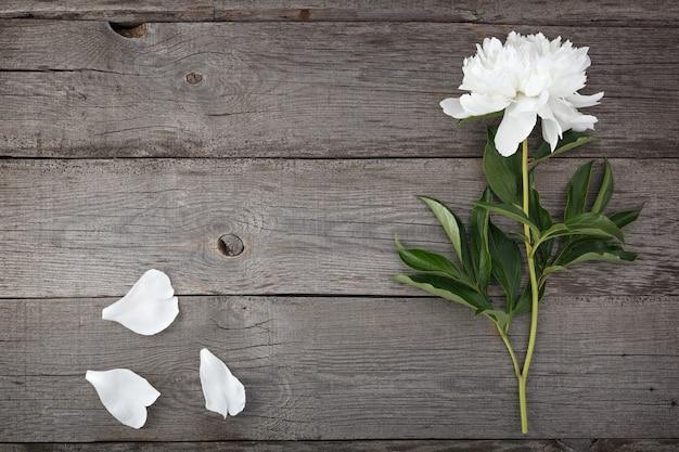 Flor de peônia desabrochando branca no fundo das placas antigas com textura.