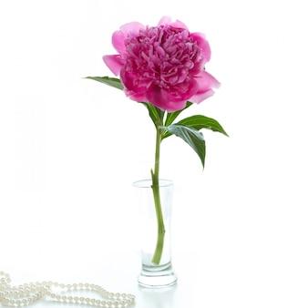Flor de peônia em um vaso