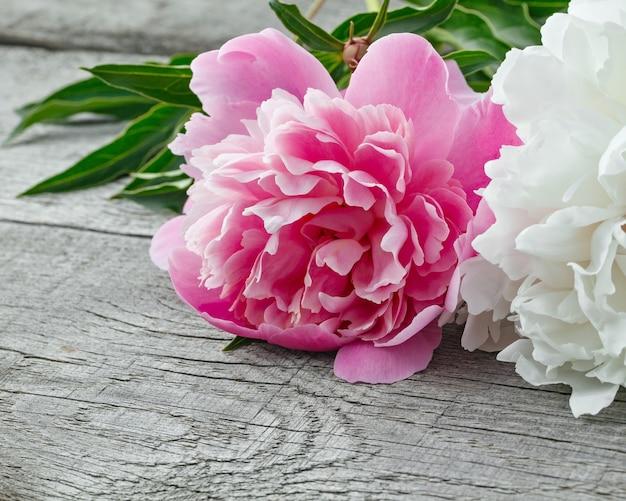 Flor de peônia florescendo rosa e branca no fundo das placas antigas com textura.