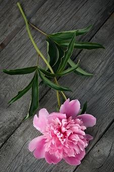 Flor de peônia rosa desabrochando na superfície de madeira