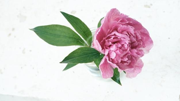 Flor de peônia rosa em fundo branco grunge