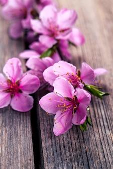 Flor de pêssego na velha mesa de madeira. flores de frutas.